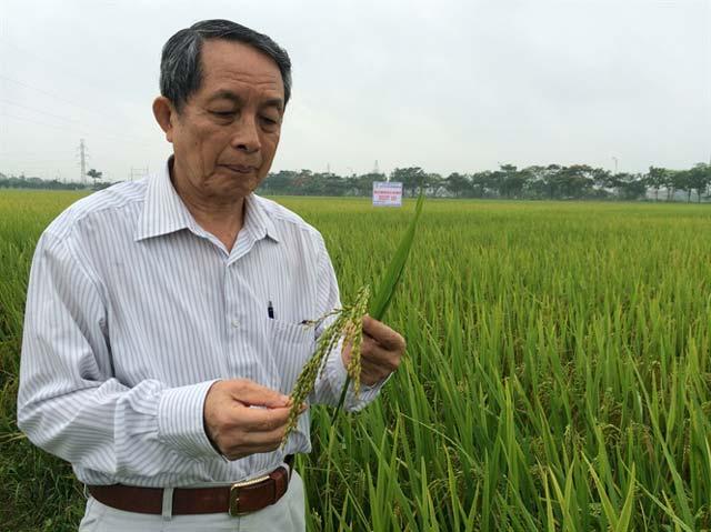 Giáo sư Viện sĩ Trần Đình Long